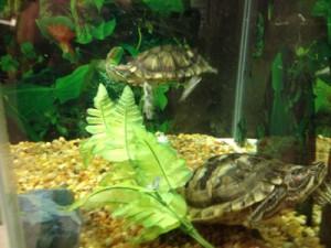 shop_turtles